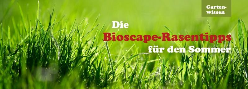 Die Bioscape-Rasentipps für den Sommer