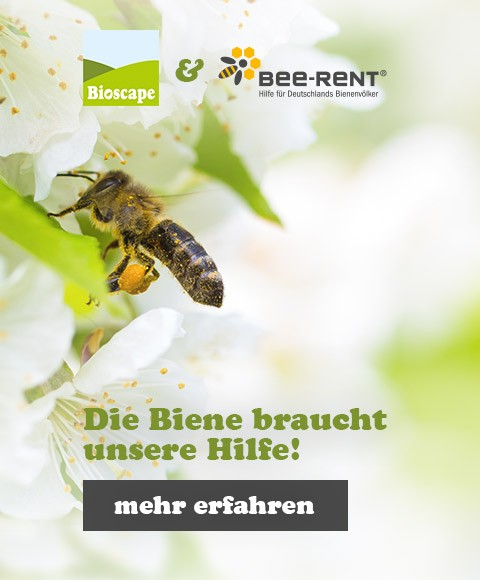 media/image/slider-mobile-bienen-new.jpg